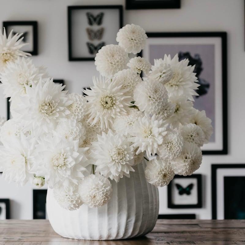 Joseph Massie: all white flower arrangement using dahlias