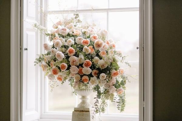 David Austin Roses-225-1