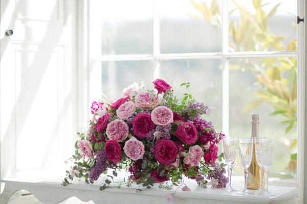 David Austin Roses-454