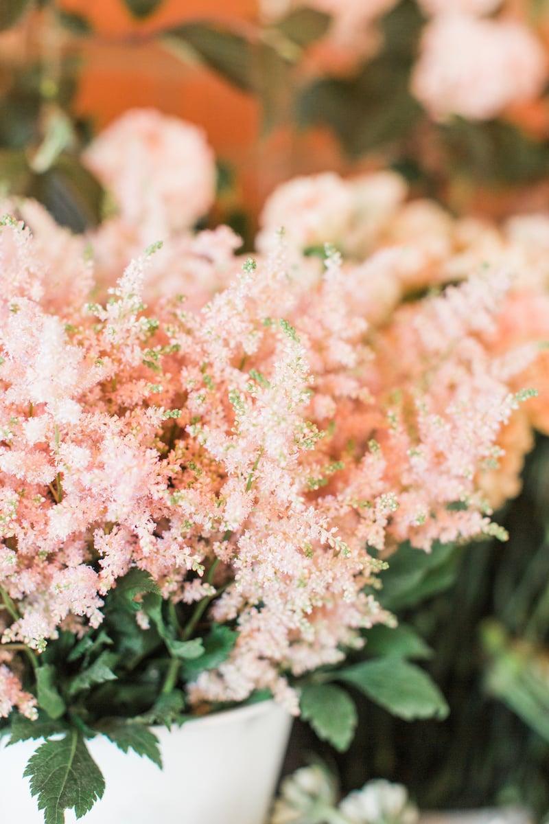 Astilbe_Light Pink