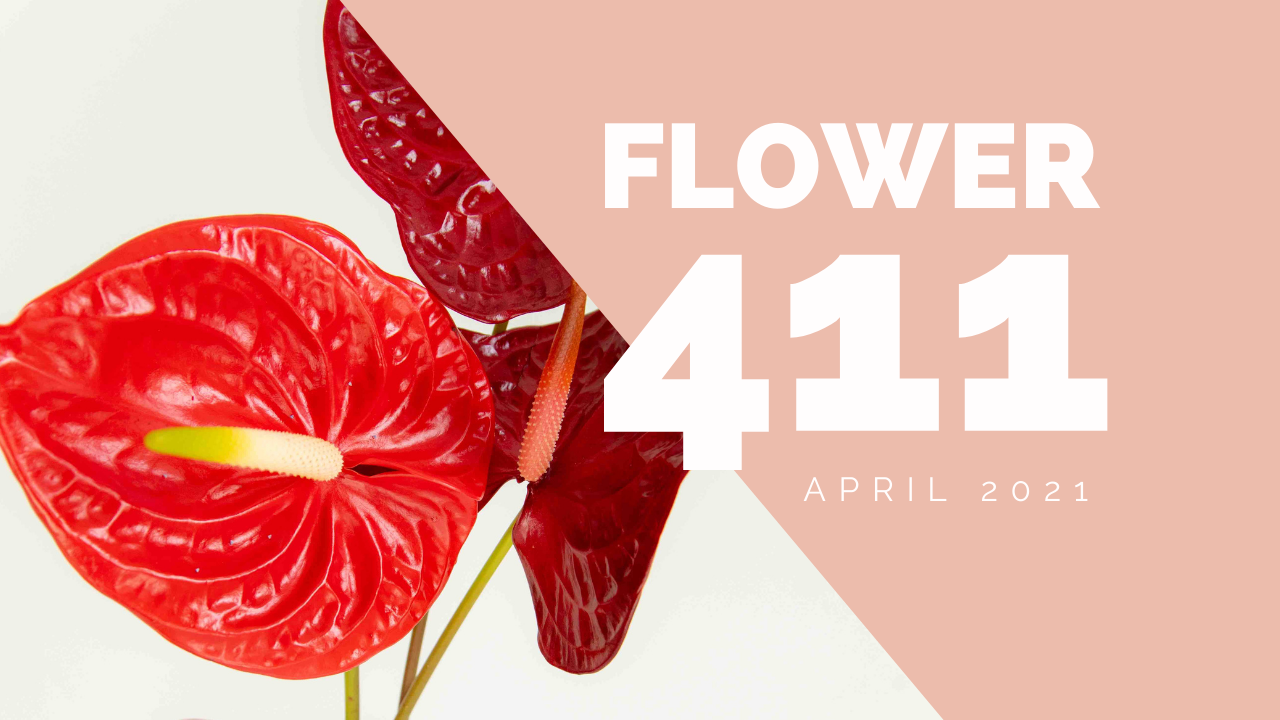 Flower-411-header (1)-2