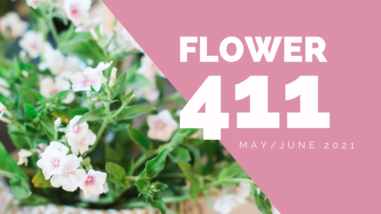 Flower-411-header-4
