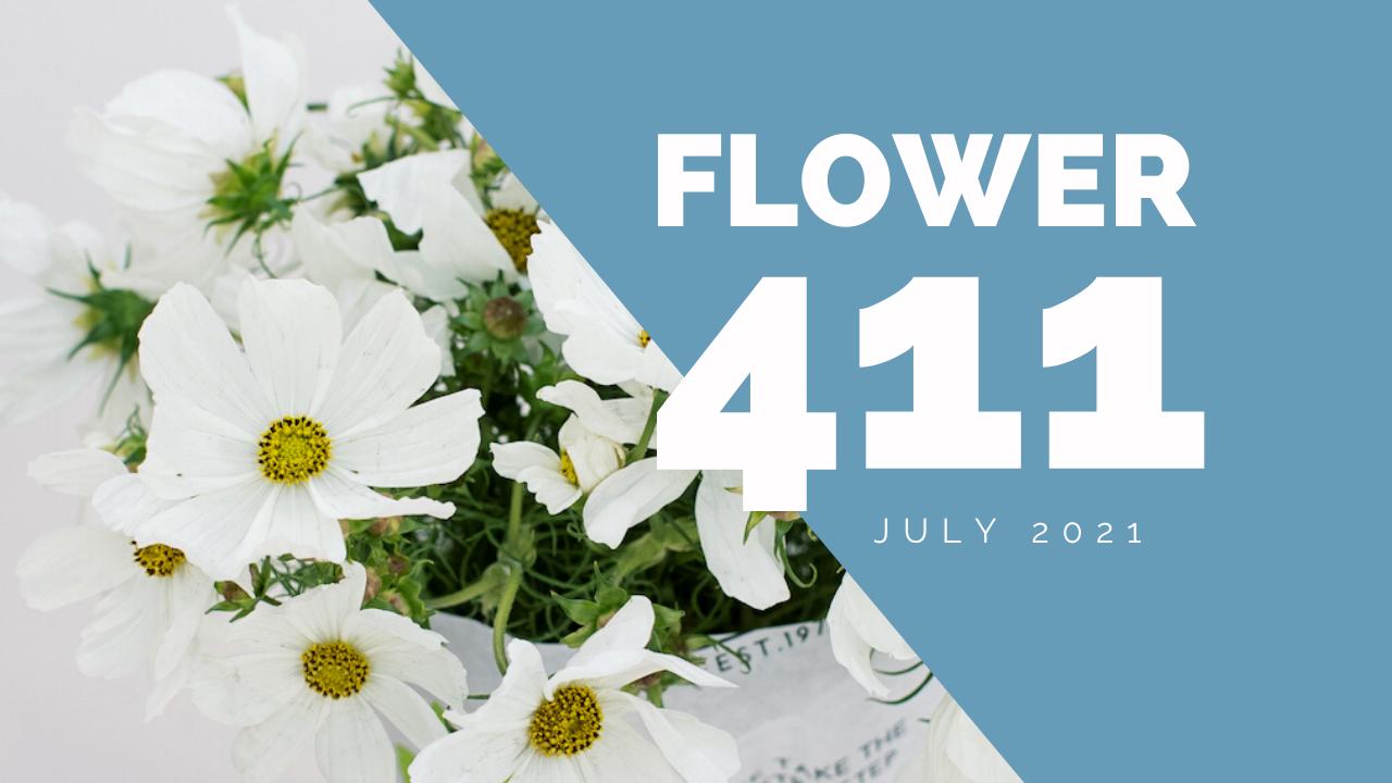 Flower-411-header-Jul-01-2021-05-11-11-17-PM