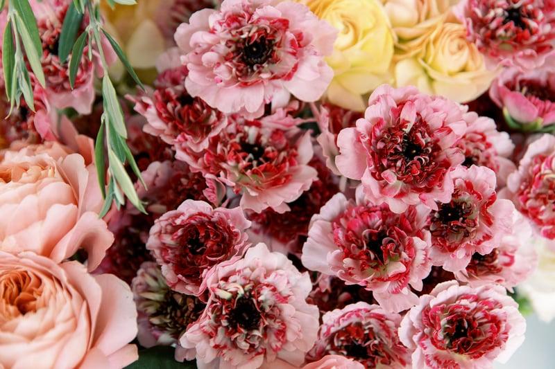 Ranunculus_ Charlotte_Raspberry
