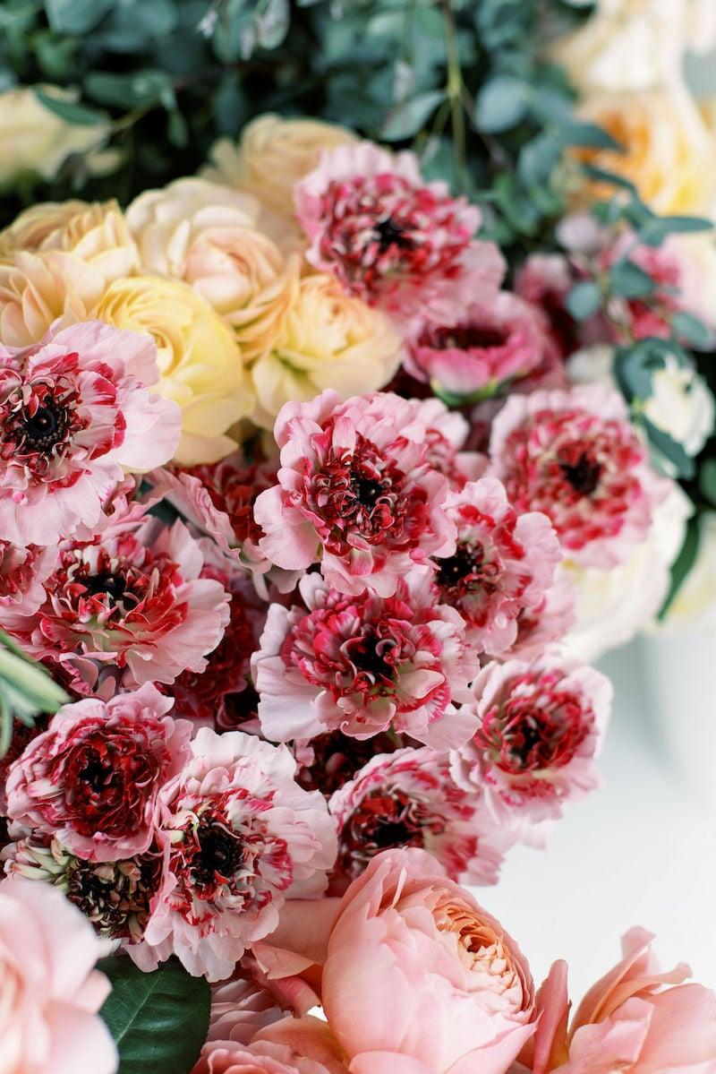 Ranunculus_Charlotte_Raspberry