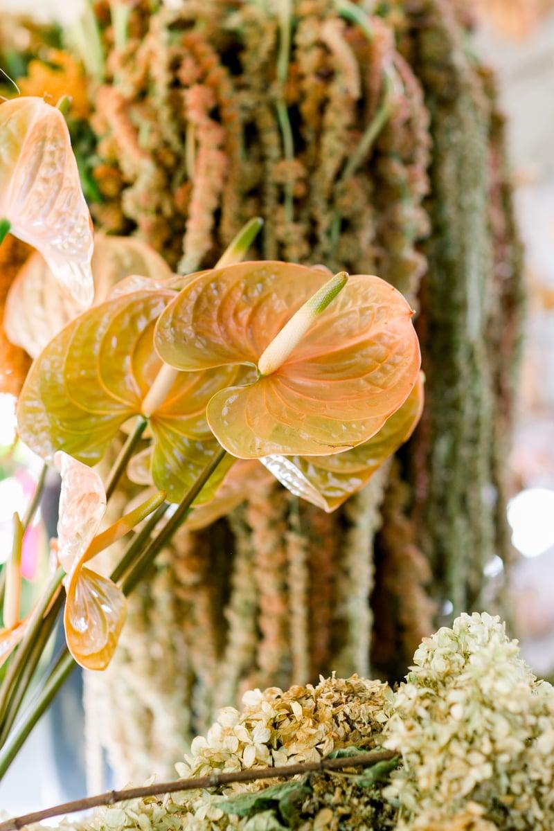 Anthurium Cognac from Mayesh Wholesale Florist