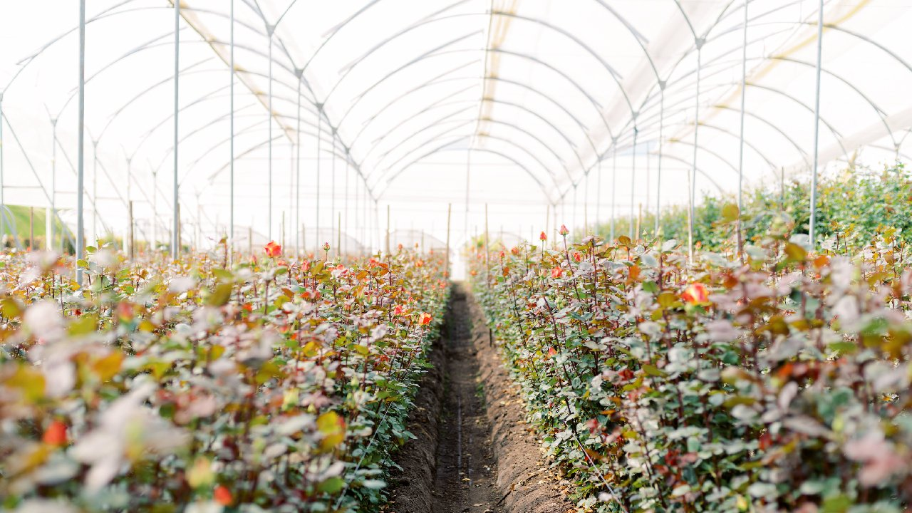 Floral Industry Impacted by COVID-19