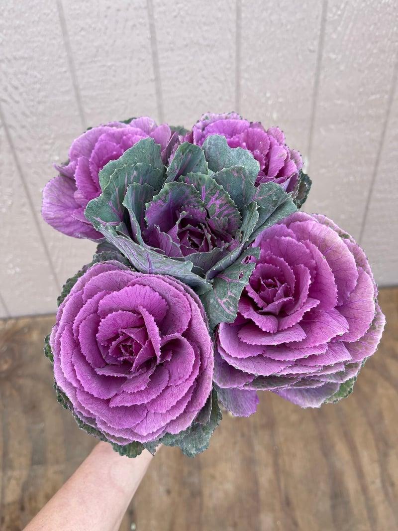 Large_Purple