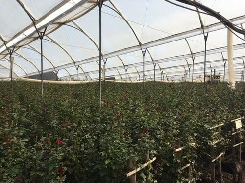 Mayesh Valentines Day Farm Visits 6