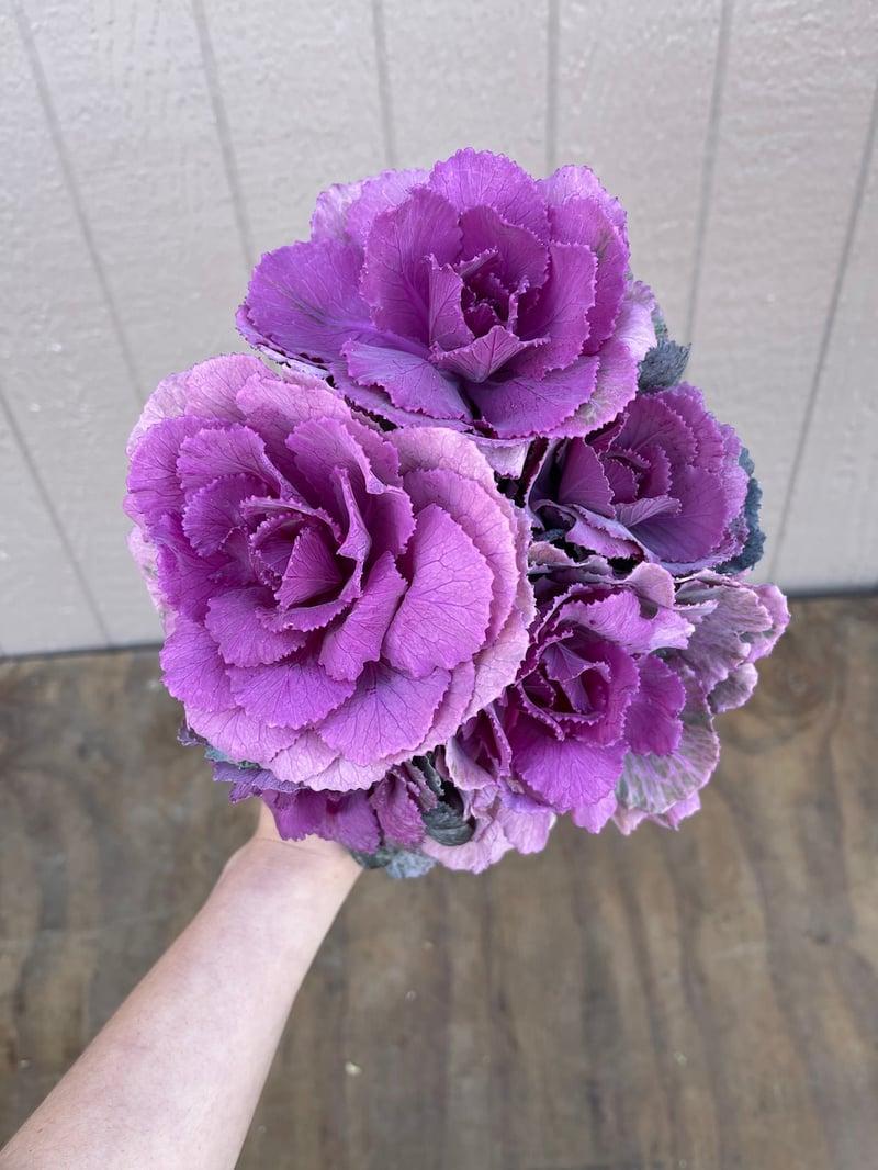 Mini_Purple