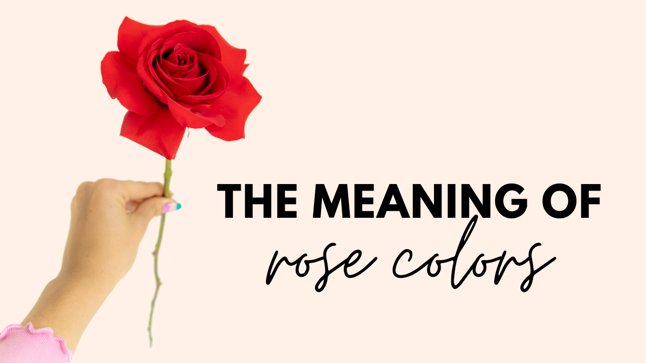 Rose Meaning Blog header