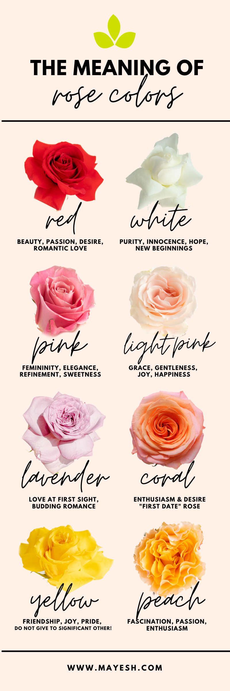 Rose-Color-Meaning-Infographic