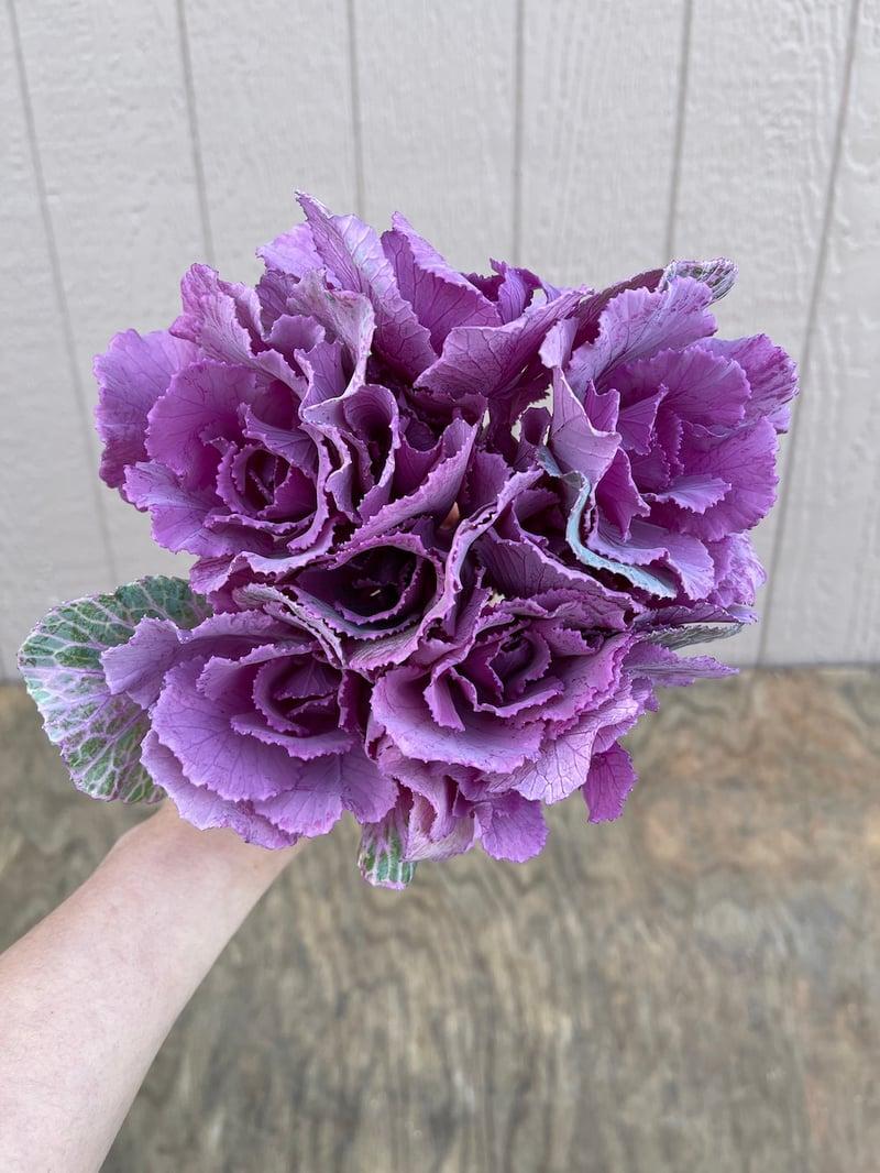 Rosette_Purple