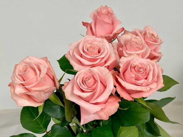 rose-be-sweet-1