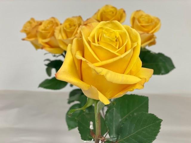 rose-bumblebee-2