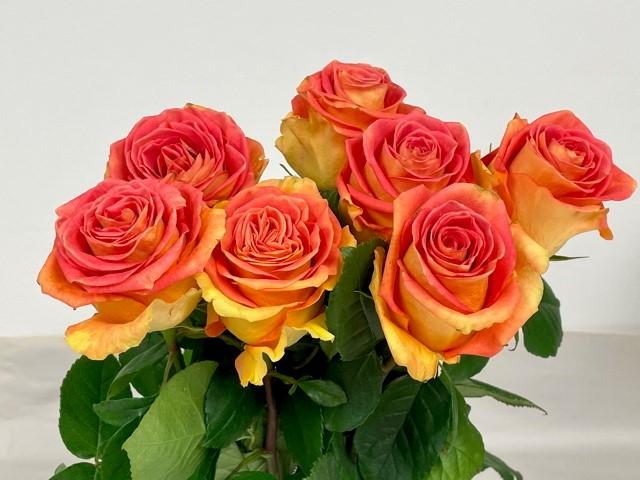 rose-grandiose-1