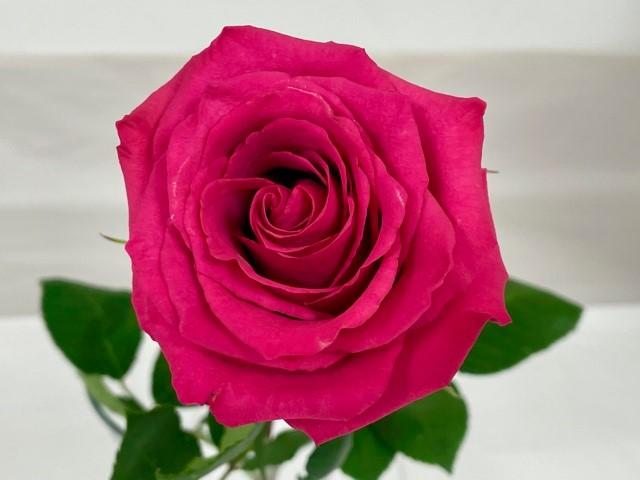 rose-level-up-3
