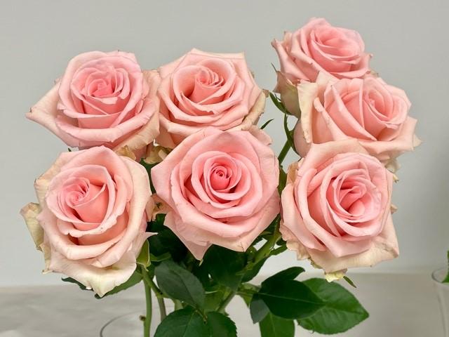 rose-unforgiven-1