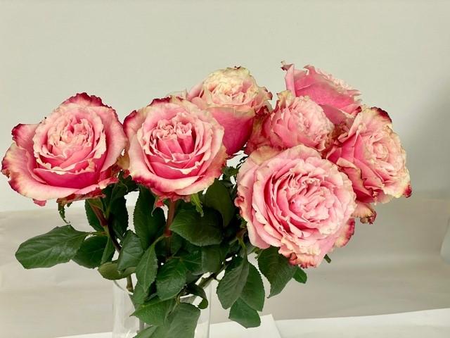 rose-wild-esperance-1