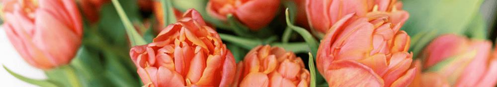 tulip standing orders