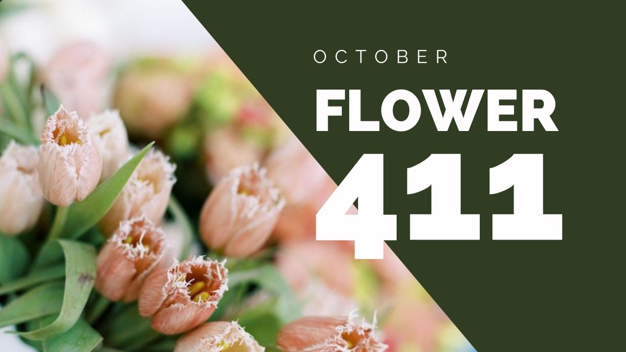 Flower-411-header (1)