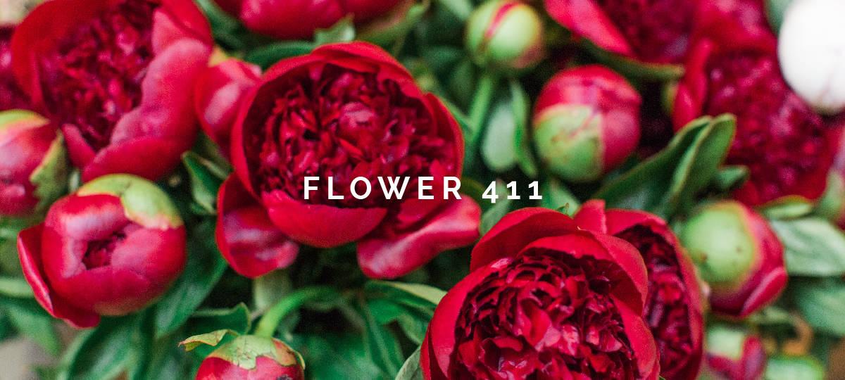 Flower 411 December