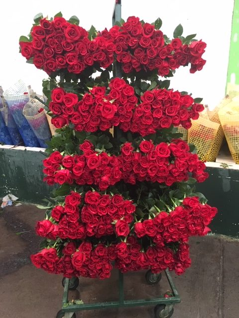 Mayesh Valentine's Day VOLC/FLED Farms Ecuador