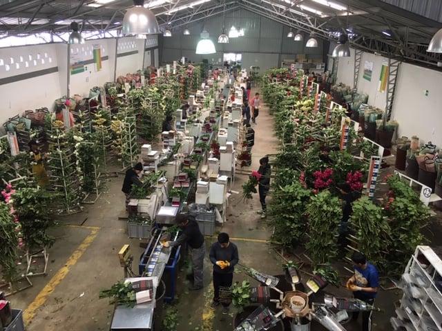 Mayesh Valentine's Day Ecuador