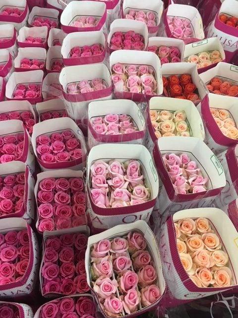 Mayesh Valentine's Day QULI Farm Ecuador