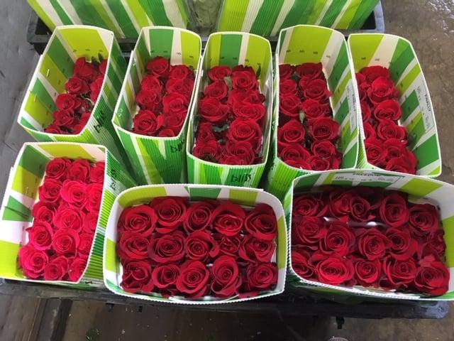 Mayesh Valentine's Day BLISS Farm Ecuador