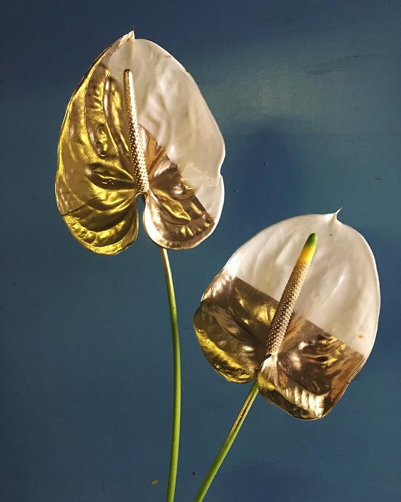 Design Master Anthuriums