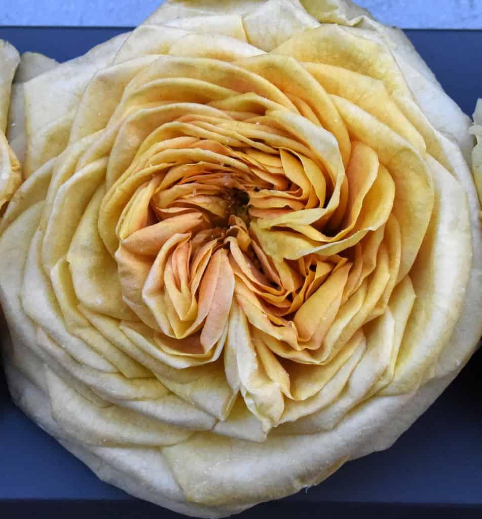 Freeze Dried Garden Rose Lemon Pompom