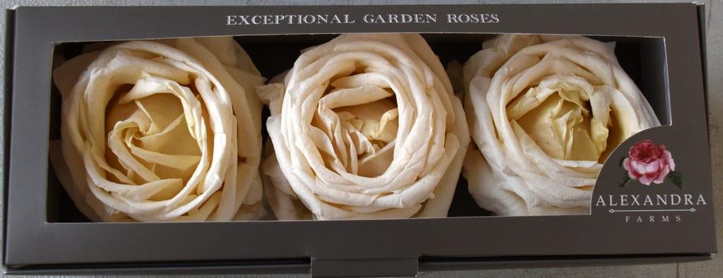 Freeze Dried Garden Rose Vitality