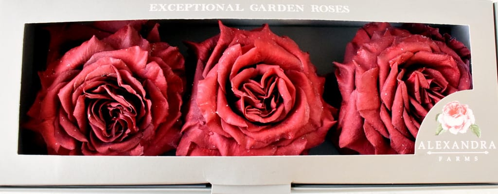 Freeze Dried Garden Rose Wanted