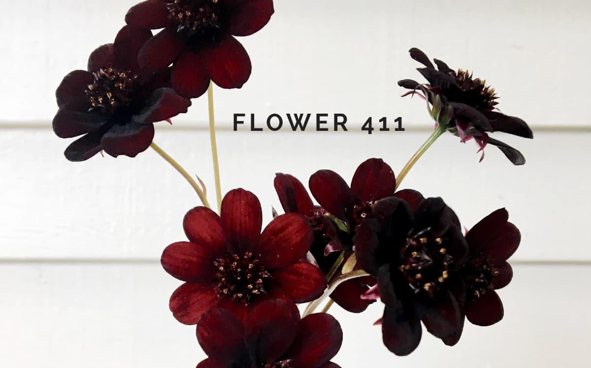 Flower 411 November Product Availability