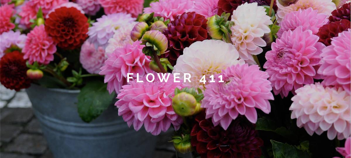 Flower 411 June 5, 2017