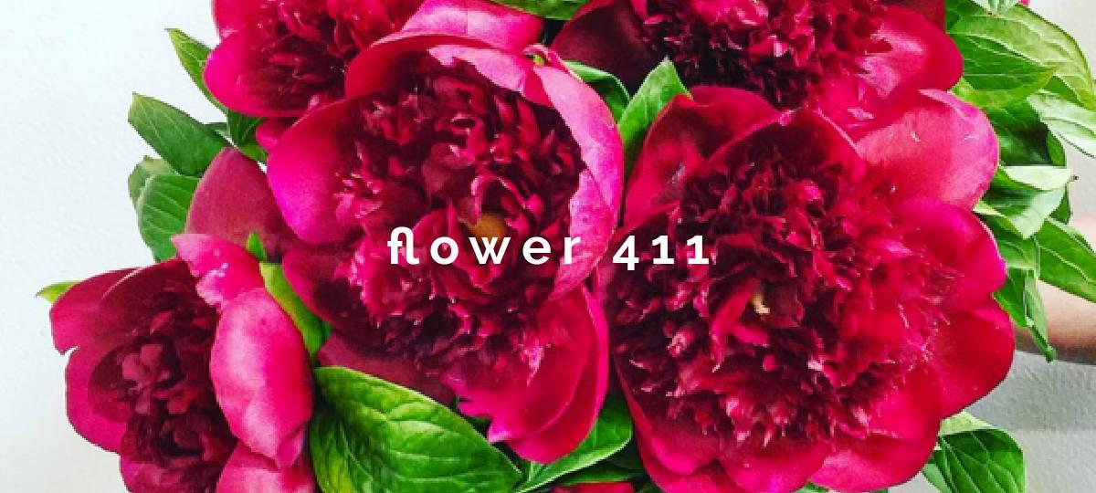 flower411_peony-01