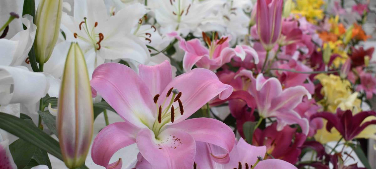 MDS Flower Workshop Sponsor Sande Flowers