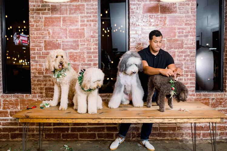 Mayesh Design Star video floral dog collars with That Dood Squad