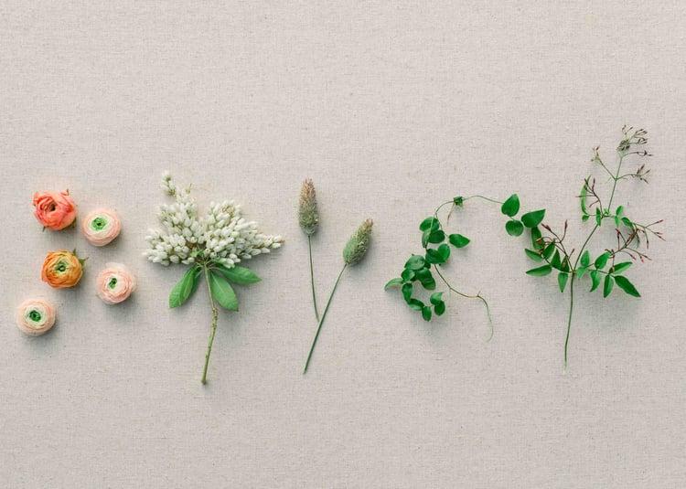 ranunculus, pieris japonica, smilax,