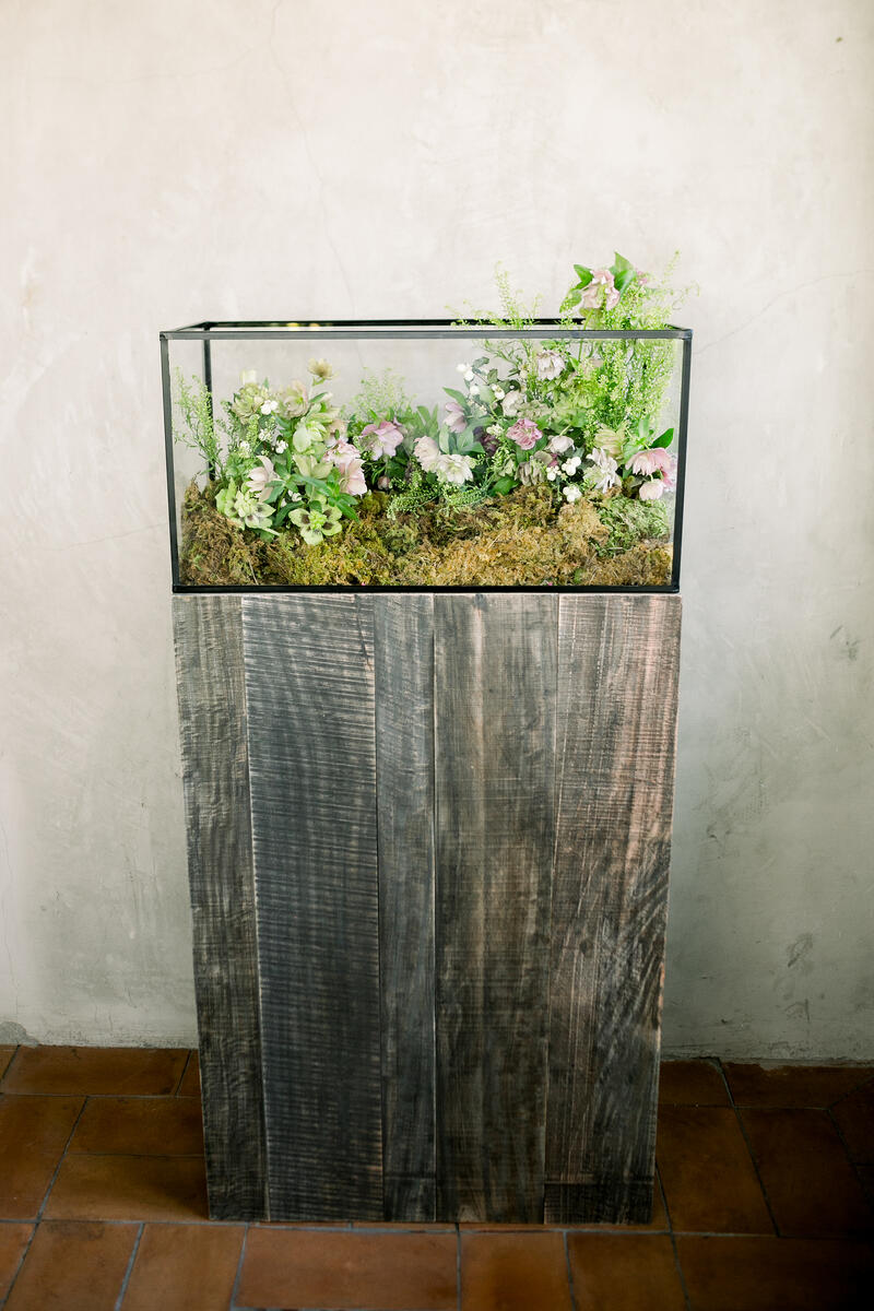 floral terrarium with helleborus, pennycress, white snow berry, acacia foliage and sheet moss
