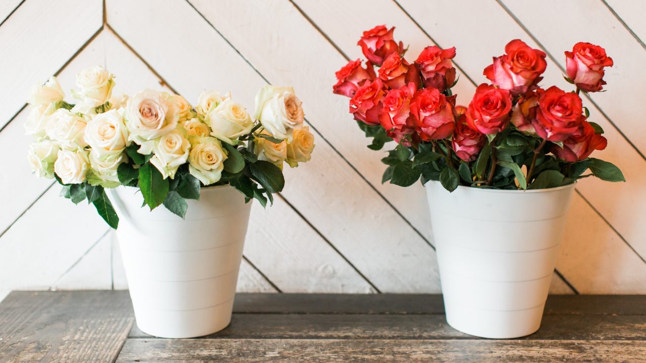 Memorial Day Flowers header