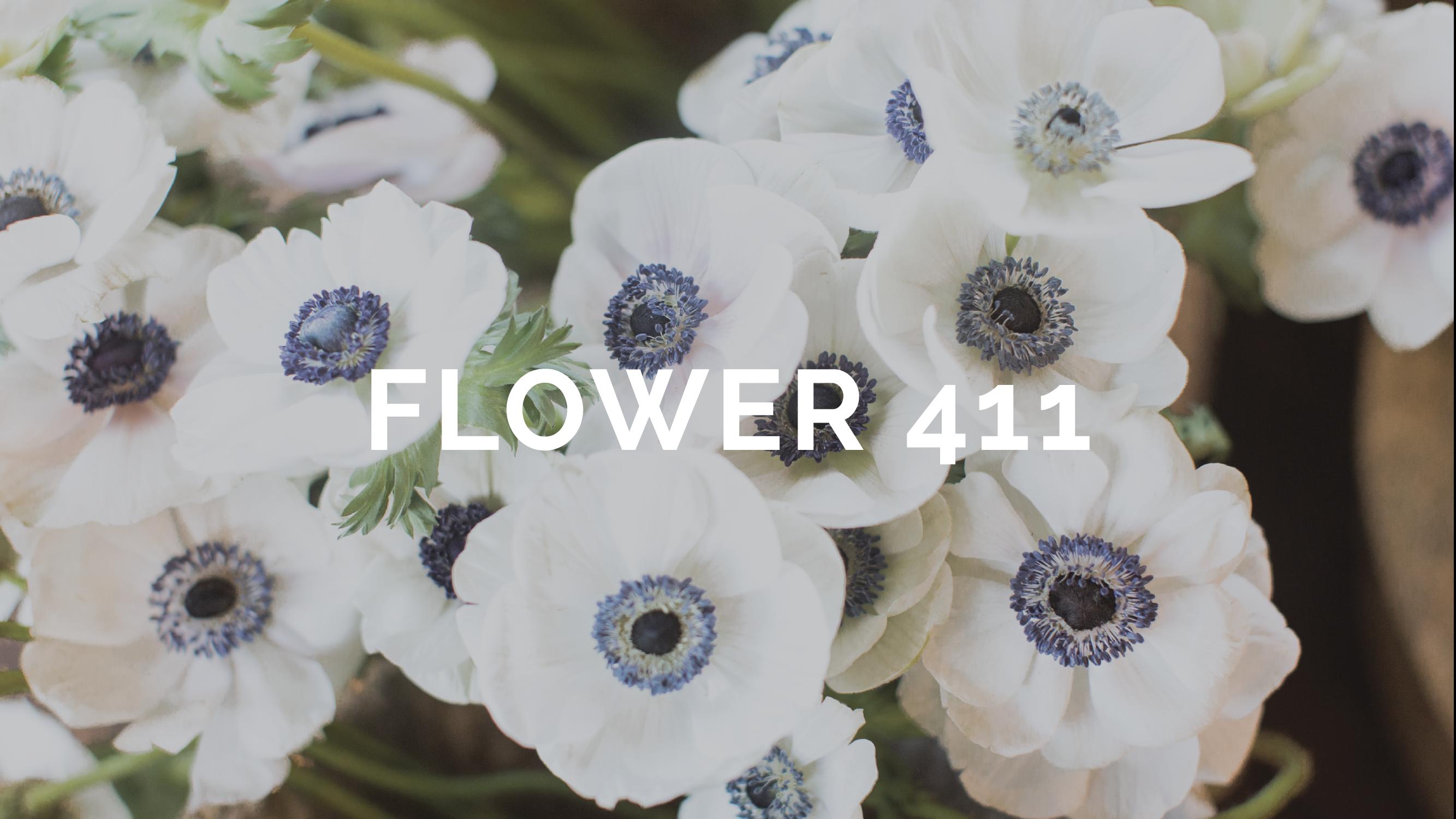 flower 411 MARCH-01