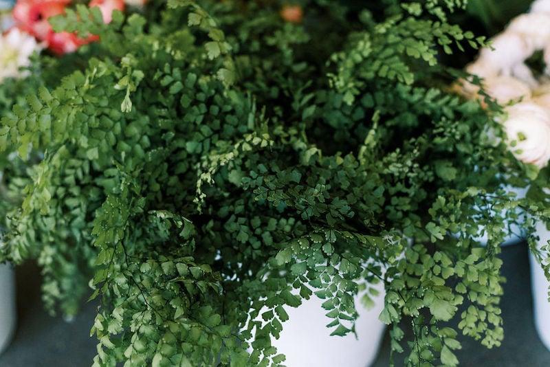 nicoleclareyphoto_mayesh_austin_-10-1Mayesh Design Star workshop featuring maidenhair fern