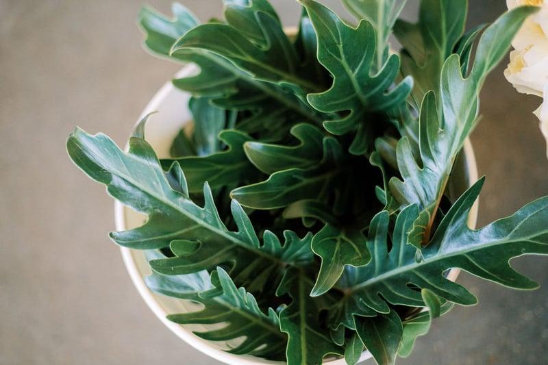 Mayesh Design Star workshop tropical greenery