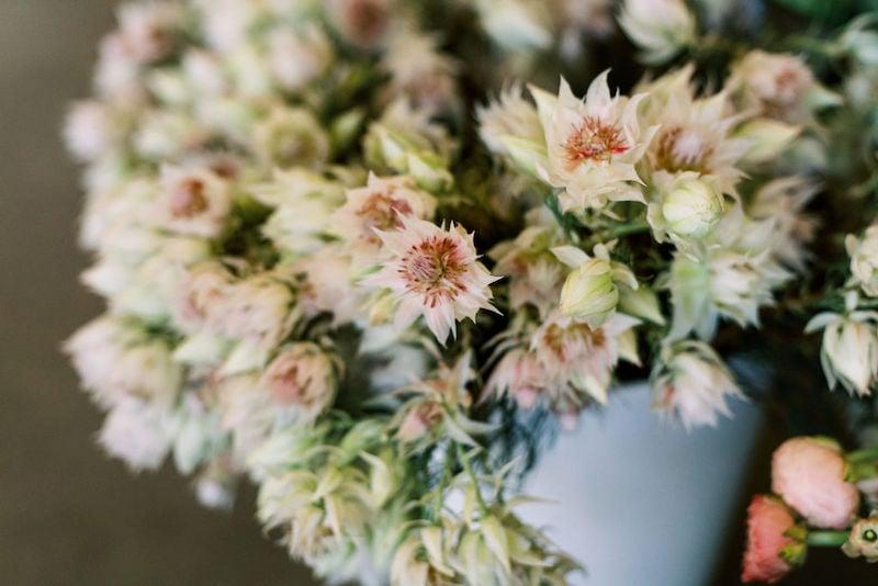 Mayesh Design Star workshop featuring blushing bride protea