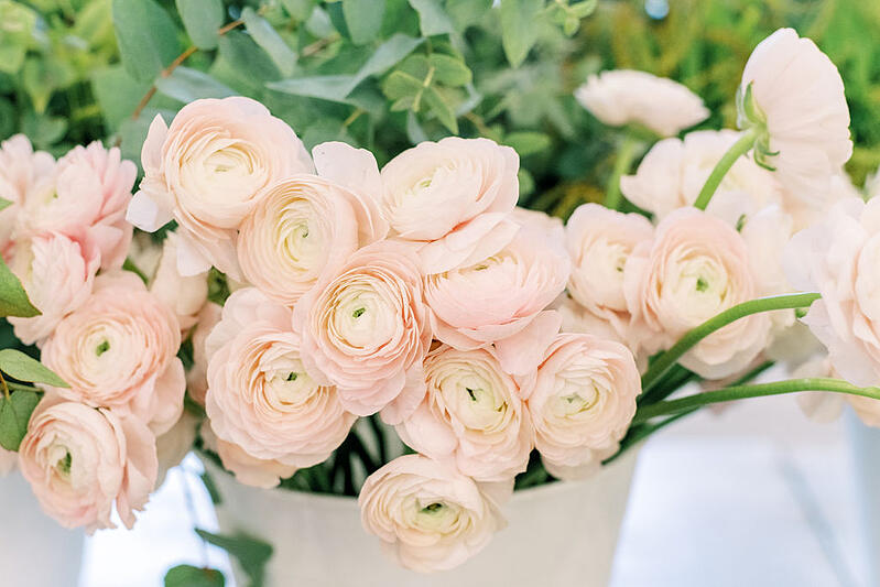 blush ranunculus at the Mayesh Design Star Workshop in Columbus, OH