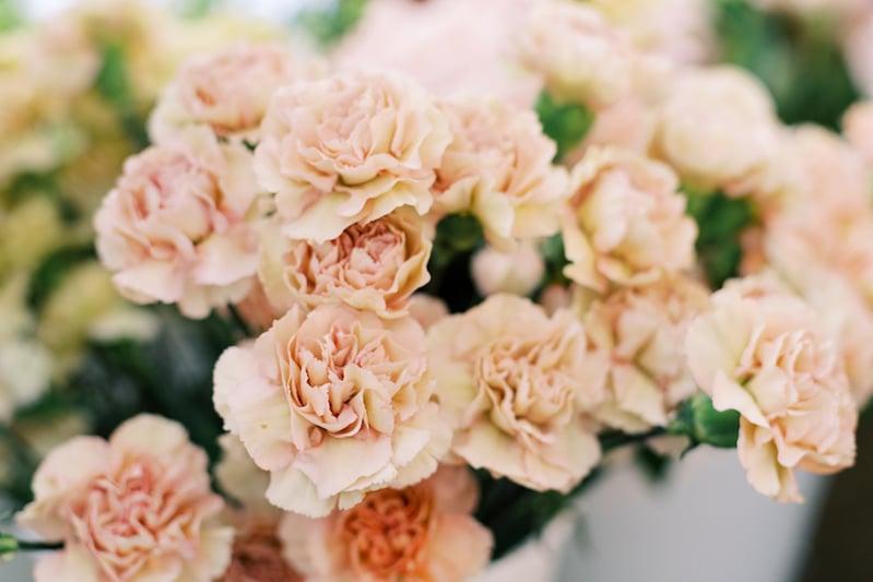 putamayo carnations from Mayesh Wholesale