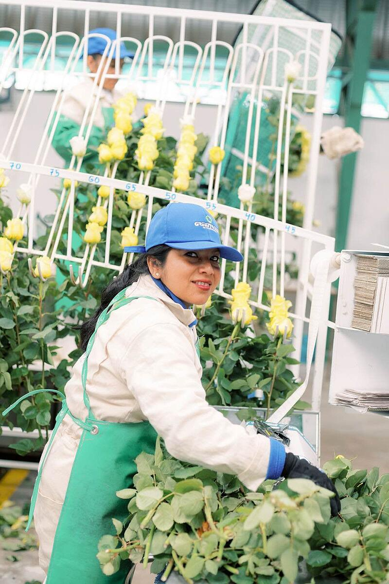 GreenRose employee making bunches of yellow roses.
