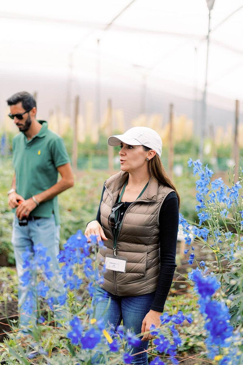 ValleFlor employee leading tour of delphinium greenhouses.